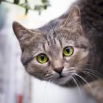 cat-1159540_1280