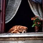 perro_mayor